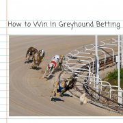 How To Win Betting On Greyhounds