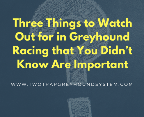 Three Things to Watch Out for in Greyhound Racing that You Didn't Know Are Important