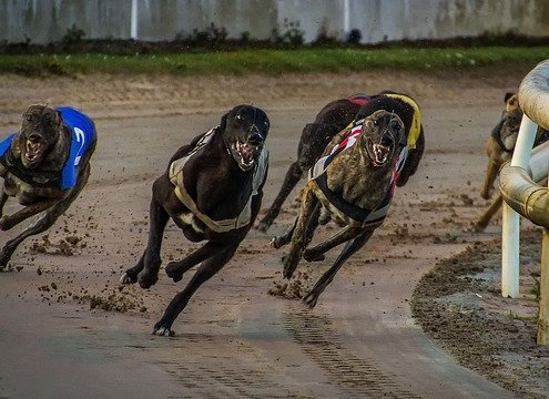 tips for dog racing 2019