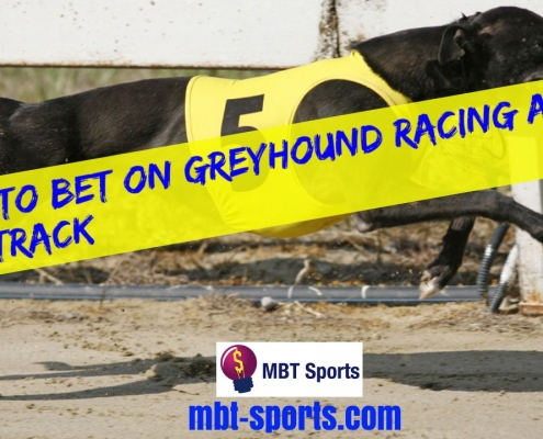 How To Bet On Greyhound Racing At The Track