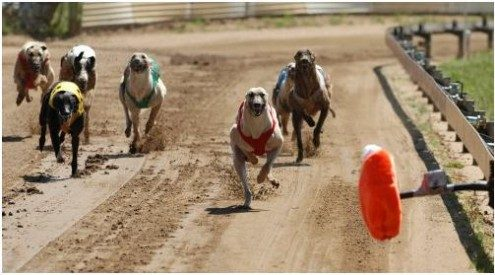 greyhound tips