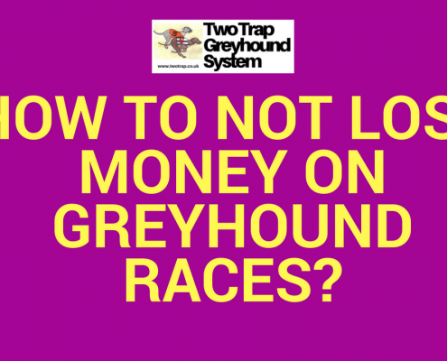 greyhound races