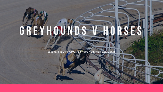 greyhounds vs horses